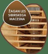 Sibirski Macesen ZAGAN LES SIBIRSKEGA MACESNA-pd-les.si